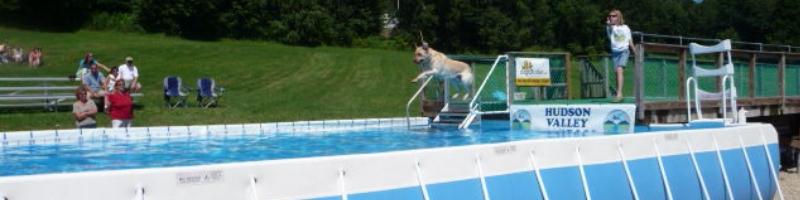 Doc Diving Dog Pool | Ledgewood Kennel | Millerton